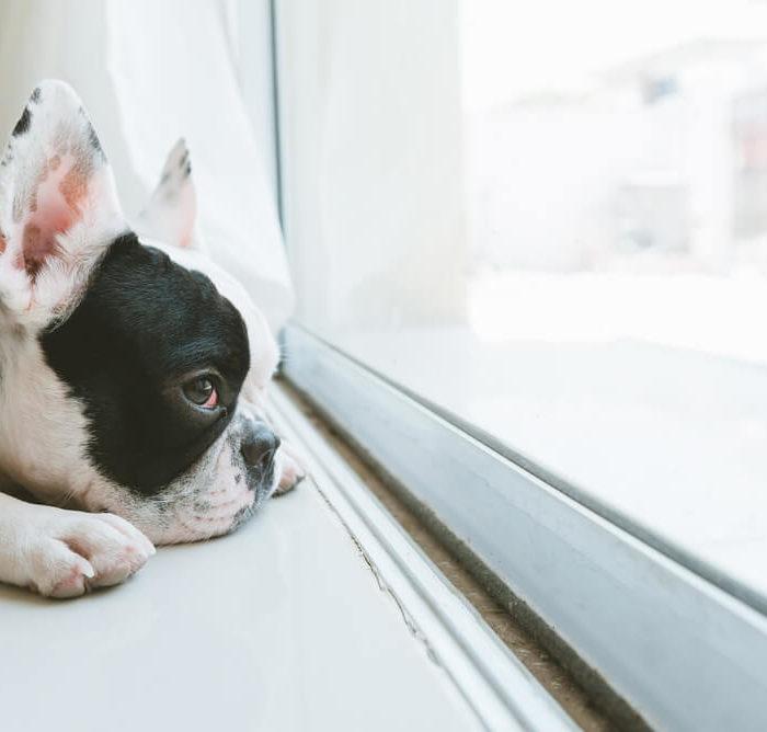 como deixar o cachorro sozinho