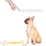 dar bronca no seu cão ou não