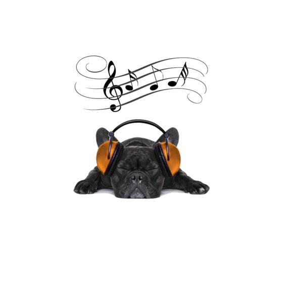 musica para relaxar o cães