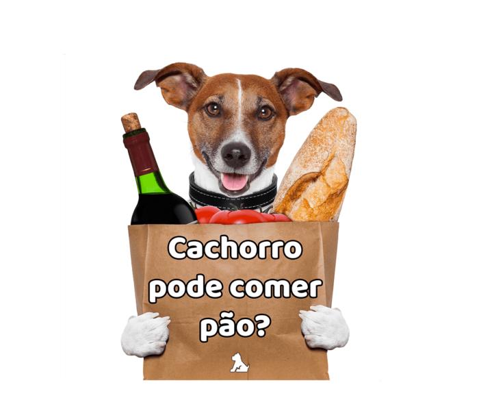 posso dar pão para o meu cachorro